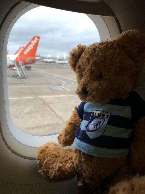 Pau Away Bear.jpg
